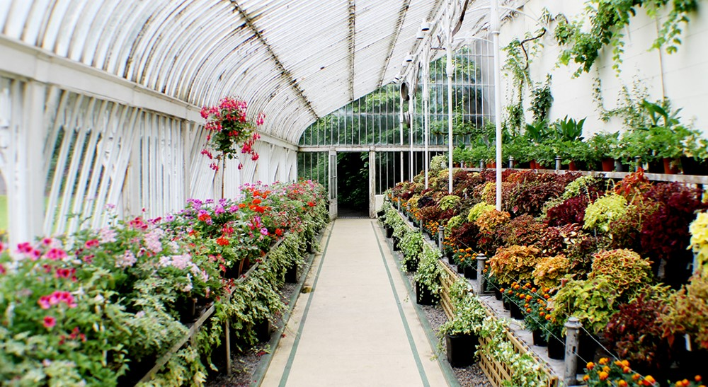 The Range Of Plants Beloved By The Victorians Is Extensive. The Craze For  Plant Collecting That Took Hold In The 19th Century Resulted In Exotics, ...