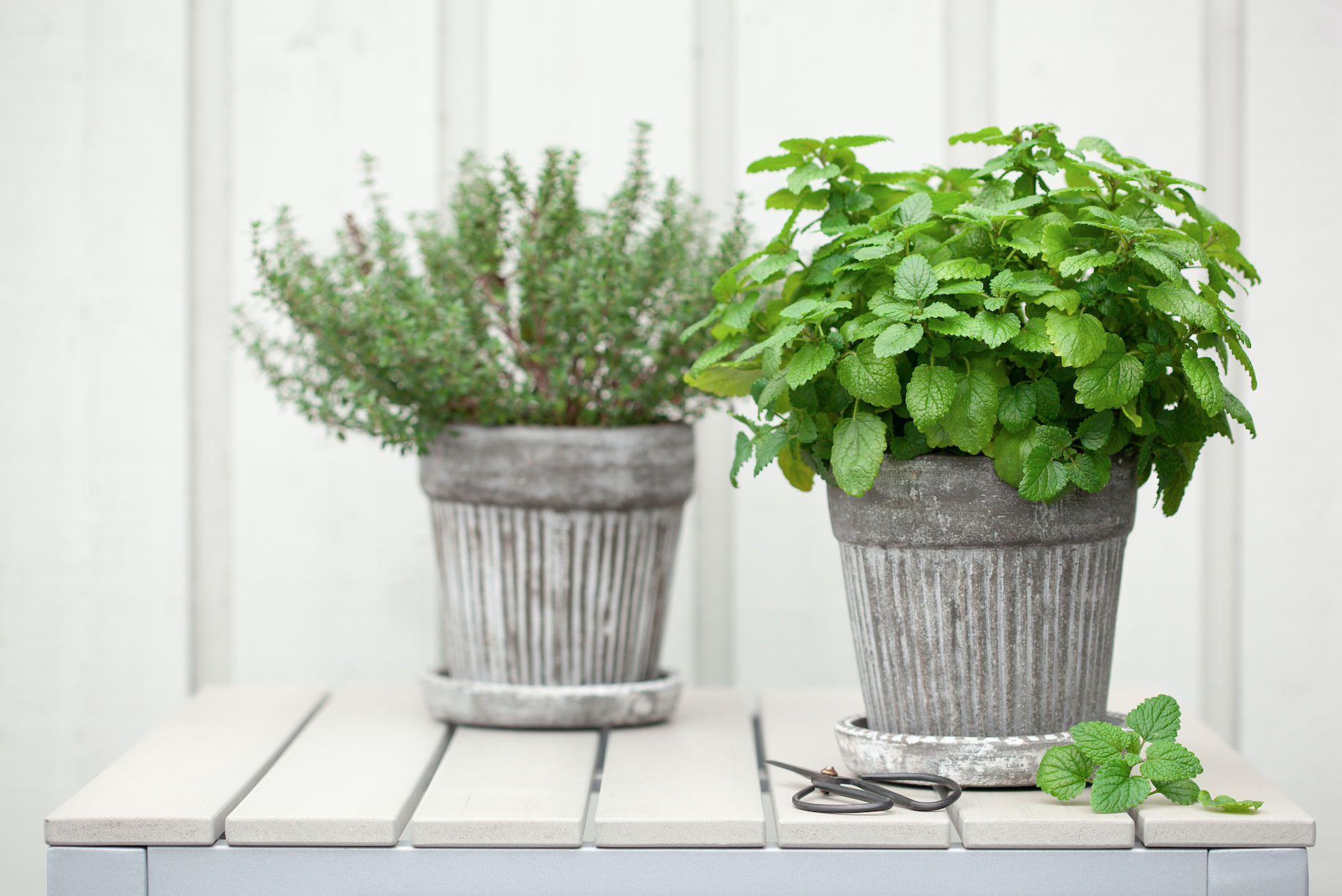 Herbs in galvanised planters